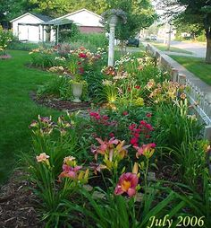 day lilly varieties in a well thought out plan