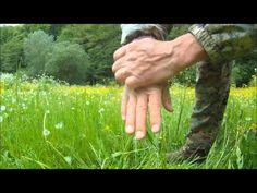 Jedlé rostliny II. - YouTube Korn, Holding Hands, Health, Youtube, Health Care, Youtubers, Youtube Movies, Salud