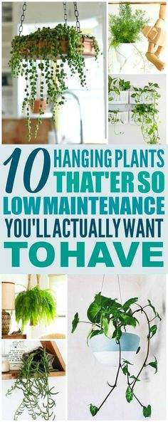 10 low maintenance hanging plants are THE BEST! I& so glad I ., These 10 low maintenance hanging plants are THE BEST! I'm so glad I ., These 10 low maintenance hanging plants are THE BEST! I'm so glad I . Inside Plants, Cool Plants, Best Indoor Hanging Plants, Indoor Ferns, Plants For Kitchen, Best Plants For Home, Indoor Shade Plants, Indoor Hanging Baskets, Hanging Flowering Plants