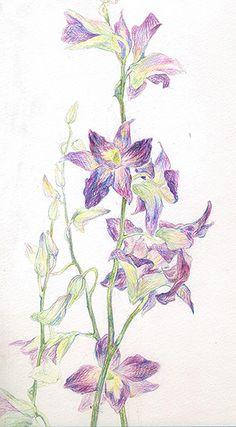 weekend flower My Works, Flower Art, Watercolors, Butter, Diagram, Map, Drawings, Flowers, Sketches