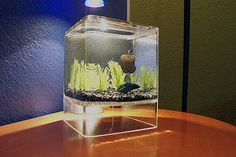Turning your expensive Mac into a home for $.50 goldfish is a very popular hobby.