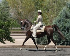 Bringing Classical Dressage to the Western Horse American Saddlebred, Western Riding, Western Tack, Riding Lessons, Western Pleasure, Dressage Horses, Beautiful Horses, Beautiful Things, Show Horses