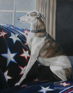 Patriotic  ♥  Greyhound