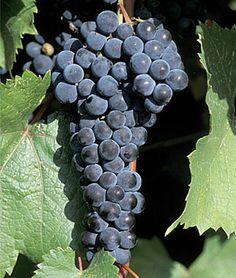 Grape's