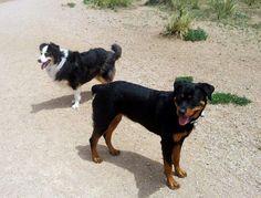 Dogs of friends in CO