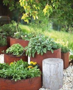 Durch die verschiedenen Höhen der Edelrost Pflanzringe aus Metall können Sie verschiedene Ebenen in Ihren Garten einbauen und haben zugleich die Möglichkeit, Pflanzen auch auf unwirtlichen Böden gedeihen zu lassen. Die Pflanzringe gibt es in verschiedenen Durchmessern und Höhen