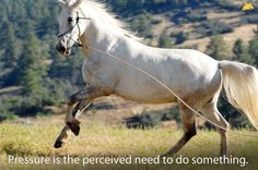 Learn how to teach your horse the appropriate response to pressure at www.parelli.com! George Morris, Horse Information, Natural Horsemanship, Horse Quotes, Horse Stuff, Barns, Fox, Training, Horses