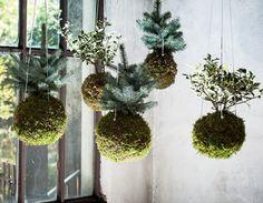 NOmadeDESIGN presenta Le piante sospese. http://bit.ly/1PzQ0sU