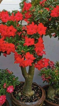 Red Plants, Cactus Plants, Garden Plants, Tropical Flowers, Purple Flowers, White Flowers, Beautiful Nature Pictures, Beautiful Flowers, Golden Pothos