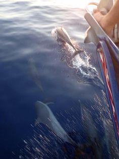 #Sailing#Roatan#Dolphins