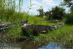Mokoro Ride in Botswana