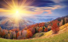 Image from http://hdpicorner.com/wp-content/uploads/2015/06/Autumn-Forest-Sunrise.jpg.