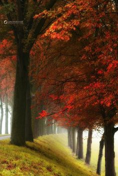 Lars van de Goor from Netherlands Nature Photographer Beautiful World, Beautiful Places, Belle Photo, Beautiful Landscapes, Wonders Of The World, Mother Nature, Scenery, Pictures, Red Leaves