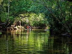 Little Manatee River - Tampa, Florida