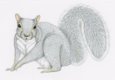 """The squirrel sidekick in """"A Sheltie's Tale"""" by Len White Sheltie, My Drawings, Squirrel, Childrens Books, Things That Bounce, Whimsical, Bunny, Greeting Cards, Illustration"""