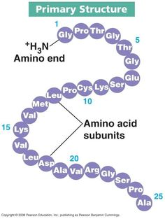 Primary structure of Proteins (Topic 3)