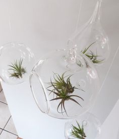 air plants. soil free. super easy to take care of. need to get some