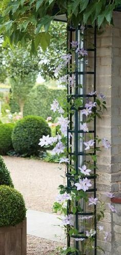 Clever way to cover downspouts with black painted trellis covered in a climbing vine like this purple clematis.