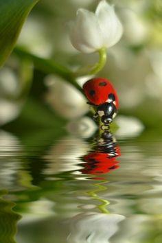 Macro photo by Nataly Kurenkova - macro photos Beautiful Bugs, Amazing Nature, Beautiful World, Beautiful Pictures, Beautiful Creatures, Animals Beautiful, Cute Animals, Insect Photography, Animal Photography