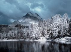 11 sprookjesachtige infraroodfotos van bomen het lijken bijna winterfo