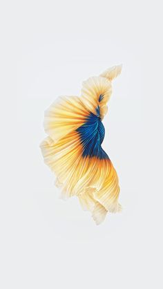 Yellow of blue of tail of fish of wallpaper of the buy inside malic government Wallpapers for iPhone X, iPhone XS and iPhone XS Max - Free Wallpaper Iphone Wallpaper Planets, Original Iphone Wallpaper, Iphone Wallpaper Images, Flower Phone Wallpaper, Apple Wallpaper Iphone, Best Iphone Wallpapers, Aesthetic Iphone Wallpaper, Apple Iphone, Live Fish Wallpaper