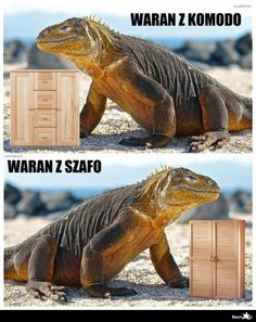 Read memy from the story karuzela smiechu by slodkiSZCZUR with 333 reads. Wtf Funny, Hilarious, Polish Memes, Weekend Humor, Komodo Dragon, Funny Mems, Mood Pics, Best Memes, I Laughed