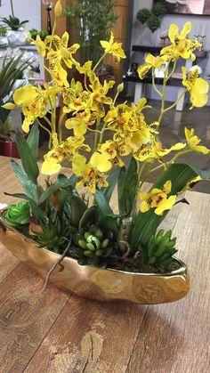 Arranjo Mini Chuva de Ouro com Suculentas Orchid Flower Arrangements, Orchid Planters, Orchid Centerpieces, Church Flower Arrangements, Artificial Flower Arrangements, Indoor Orchids, Artificial Orchids, Orchids Garden, Ikebana