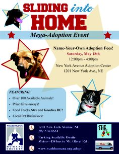 It's our annual cats & kittens adoption event! We'll have
