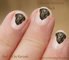 Black Labrador Nail Art Stickers Black Lab Decals by Kerioak