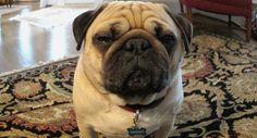 Why Does My Dog Always Stare at Me? http://www.petsadviser.com/behaviors/why-does-my-dog-always-stare-at-me/