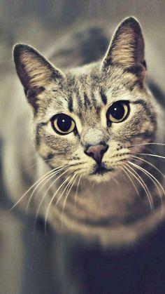Cat #BigCatFamily
