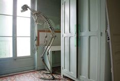These Animal Skeletons Are Out Of The Closet And Running Amuck In Your Home. - ViralVertex