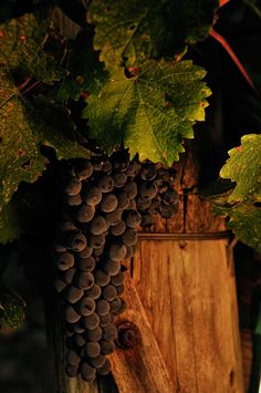 Sonoma Vineyards by Fausto Rowlan on 500px