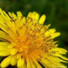 Yellow Flowers » Biskvitka.net - The First Bulgarian Entertainment Portal