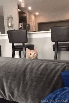 Understanding Your Cat's Aggressive Behavior Funny Animal Videos, Funny Animal Pictures, Funny Animals, Cute Animals, Animal Funnies, Cute Cat Memes, Cat Jokes, Funny Cats, Cute Cats And Kittens