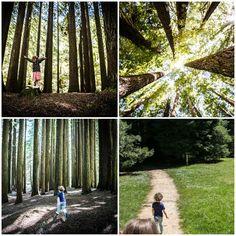 redwood coll 1.jpg