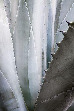 https://flic.kr/p/fcqEBA   Cactus   Old Town, San Diego