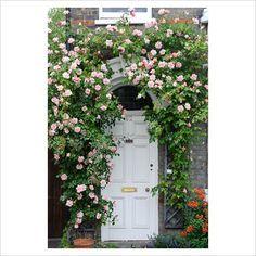 Ivy Door Ways On Pinterest Red Doors Ivy And Front Doors