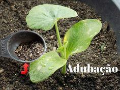 Adubação Forte Venha aprender!!! - YouTube