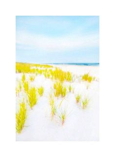 "Cheryl Maeder ""Hampton Dunes"" Art Photograph on Chairish.com"