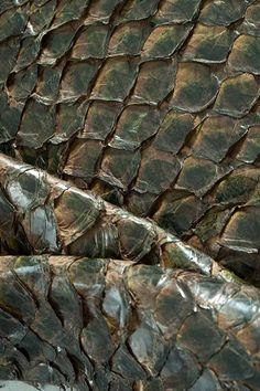 Peau de poisson Amazone - Amazone Fishskin  #fishfurniture #furniture #upholstery #Möbel #mobilier #revêtementmobilier #peaudepoisson #fishskin #Fischhaut #decoration www.norki-decoration.com