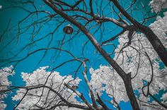 Super blue infrared photography nikon d90 sky trees