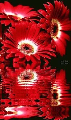animated flowers gif - Pesquisa Google