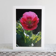 Big Pink Poppy Photo Greeting Card Beauty in the by CarolaBartz