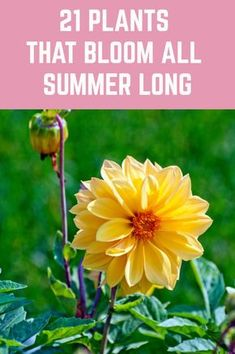 21 Plants That Bloom All Summer Long - - Here is a wide selection of beautiful summer plants which bloom profusely throughout the season without much pampering from you. Shade Garden Plants, Summer Plants, Summer Flowers, Shaded Garden, Garden Yard Ideas, Lawn And Garden, Garden Projects, Garden Tips, Balcony Garden