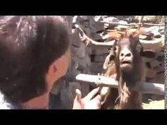 FunnyVideo: Mincinosule chiar asa!! 😂😂😂faza de tot rasu