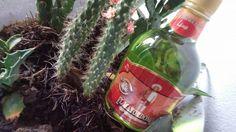 #Licor de #Agave con Miel sabor #Lima #Lime #Mayordomo #ElMayordomo #AusencioLeon #Mezcal