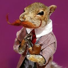 Taxidermy chap squirrel with pipe Taxidermy, Squirrel, Teddy Bear, Toys, Unique Jewelry, Handmade Gifts, Animals, Vintage, Activity Toys