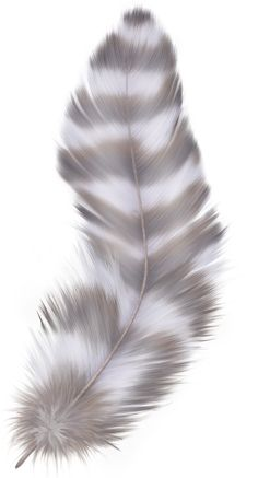 "Photo from album ""Перья"" on Yandex. Feather Drawing, Feather Painting, Feather Art, Feather Tattoos, Ruffled Feathers, Bird Feathers, Painting & Drawing, Watercolor Paintings, Watercolors"