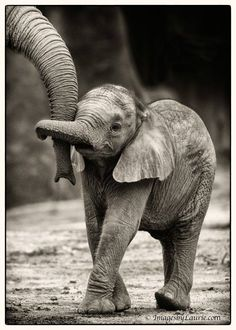 I don't think anyone can understand just how much I want to play with a baby elephant. So cute!